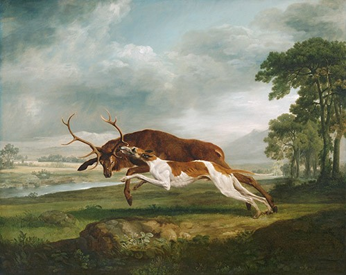 animals - Hound Coursing a Stag (caza) - Stubbs, George