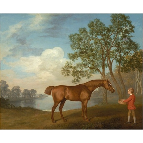 Pumpkin with a Stable-lad (caballos)