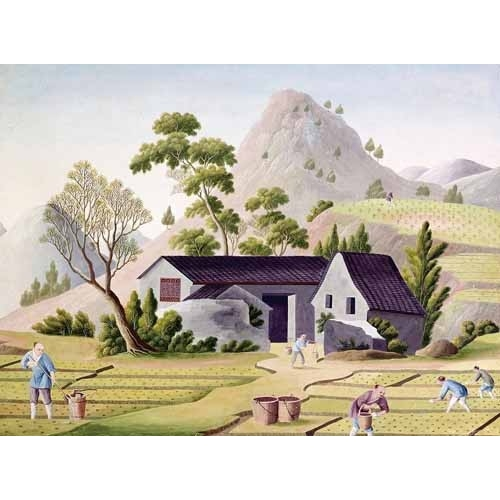 Comprar ethnic and oriental paintings - Campesinos en los arrozales online - _Anónimo Chino